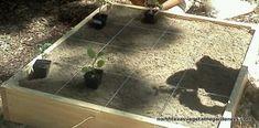 North Texas Vegetable Gardening 101