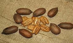 """PECANS ON BURLAP America's love affair with pecans goes way back. In fact, back to a time before there even was an America. There's a lot more to pecans than pecan pie. For instance, pecan is actually an American Indian word that translates as """"all nuts requiring a stone to crack."""" Because the nuts grew wild, pecans became a staple food for certain American Indian tribes."""