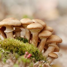 little mushrooms no. 7