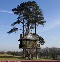 i want an awesome tree house