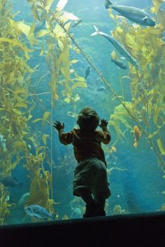 Check out our live Kelp Cam!  http://aquarium.ucsd.edu/Education/Learning_Resources/Kelp_Cam/