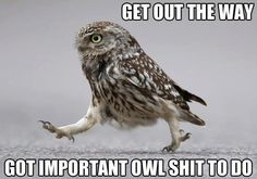 Important owl shit...
