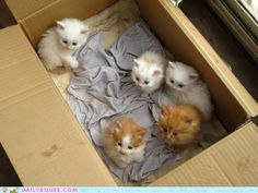 Even very small items can fit in our boxes.  www.pack-secure.com