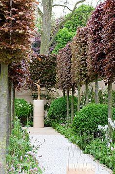 FOCAL POINT PATH WITH PLEACHED FAGUS SYLVATICA PURPUREA - COPPER BEECH. Arne Maynard design. Chelsea Flower Show 2012.