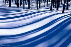 John Shaw- Shadows of burned lodgepole pines; Yellowstone National Park.