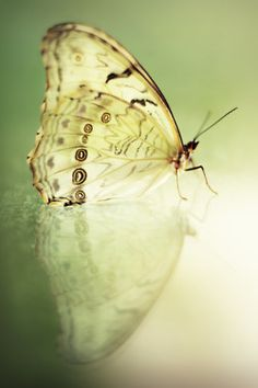 butterfly in the light!