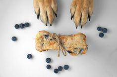 cheddar blueberry biscuits! #diy #dogtreat #homemade #dogs