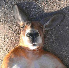 Kangaroos = my new favorite animal