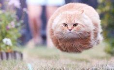 Pokeball, go! I choose you, Garfield!
