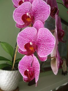 Orchids at Old Thyme Inn in Half Moon Bay, California half moon bay