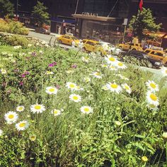 Flowers in bloom & taxis in zoom. We love #spring time in the city!