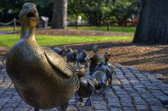 Make Way for Ducklings Statue in Boston Garden