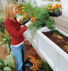 Planting Window Boxes < Fix Up a Front Entry | MyHomeIdeas.com