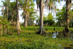 Swamp country, SOLA
