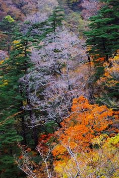 ✯ Beginning of autumn in the mountains