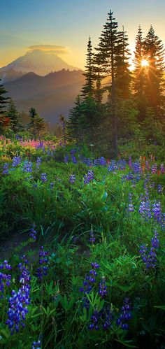 Mount Rainier east of Seattle, Washington • photo: Inge Johnsson on RedBubble