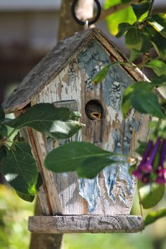 Cute baby bird in birdhouse  Rooted In Thyme blog