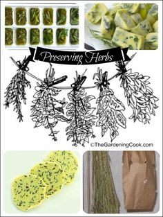 Tips for preserving herbs by freezing and drying.
