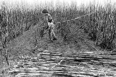 La deforestación ha convertido el que una vez fuera el fértil hogar de los guaraníes en una inmensa extensión de haciendas de ganado y plantaciones de caña de azúcar que abastecen el mercado de biocombustibles. La industria de biocombustibles de Brasil es una de las más potentes del mundo, sí, pero está manchada de sangre indígena.