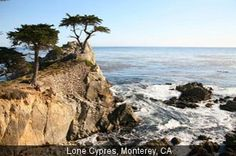 Lone Cypress, Monterey Monterey Bay Vacation Reviews - hotels, resorts, activities, and more