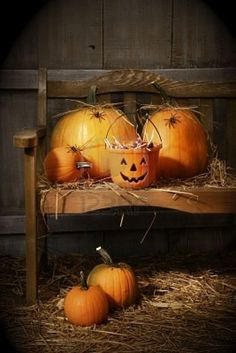 country halloween bench, bats, primitive country, halloween pumpkins, barns, spider, autumn falls, countri halloween, happy halloween