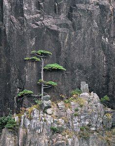 Model landschap: giant niwaki...