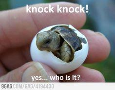 Baby Turtle!