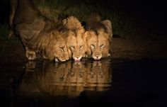 Photo Thirsty Trio by Keith Connelly Photographics on 500px