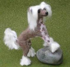 chinese hairless dog