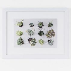 Minted for west elm - Succulents Observation - love it!