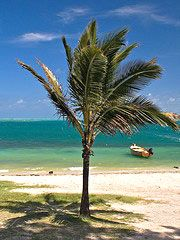 Ahhh, the coconut palm. Take me away...to the Caribbean.