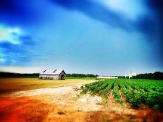 """Storm Brewing""  Drive By iPhoneography Near NEA, Jonesboro, Arkansas and Memphis, Tennessee Jonesboro | Memphis | Construction | Architecture | Vintage | IPhoneography | Arkansas | From www.arkansasconstruction.co"