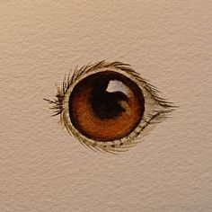 Step by step watercolor: The Eyes Have It!