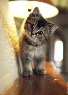 sweet baby kitten face//
