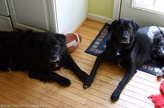 Awesome Tips For Dog Owners With Hardwood Floors! #dogs