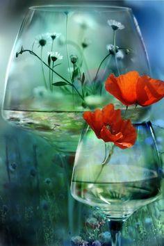 <3 glass flowers, orang, color blue, wine glass, flower vases, poppi, garden, cut flowers, flower photography