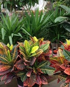 Tropical plants on pinterest 25 pins for Easy maintenance plants