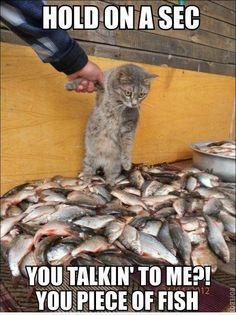 Hold on a sec   Cat Meme
