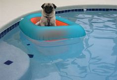Boat Operating:  Pug satisfaction: 9/10  Dog treat earnings: 2 per hour  Projected belly rubs: 6 per 2 hours