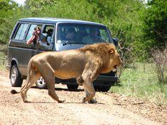 Kruger National Park Animals - Bing Images