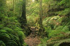 Blue Mountains National Park at Blackheath, NSW, Australia.