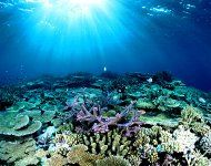Scuba dive in the Barrier Reef