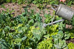 It's Easy to Plant a Kitchen Garden