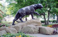 University of Pittsburgh panther!