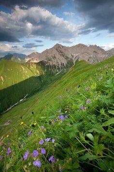 Beautiful alpine Meadows in Tirol, Austria  #austria #tirol #mountains #summer #green #meadow #nature #flowers
