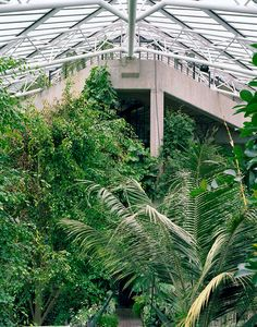 The Barbican Conservatory