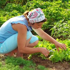 Grow Your Own Fruit, Vegetables and Herbs