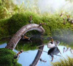 """""""new bridge and scrounger boatman"""" Russian photographer Andrey Pavlov uses real ants to create amazingly cool photographs in the series """"Ant Tales"""""""