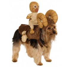 Star Wars Costumes for Your Pooch: You'll Love 'Em, He'll Hate 'Em!