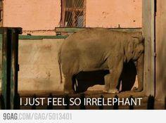 elephants, anchors, animals, laugh, animal jokes
